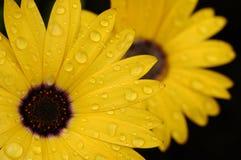 kropla liści, Zdjęcia Stock