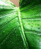 kropla liści, Fotografia Royalty Free
