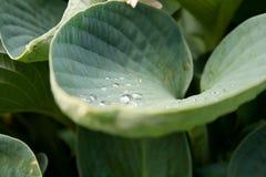kropla liści, Obraz Stock