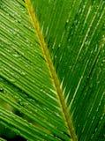 kropla liścia palmy Zdjęcia Stock