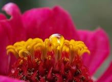 Kropla na kwiacie zdjęcie stock