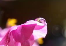Kropla na kwiacie obraz royalty free