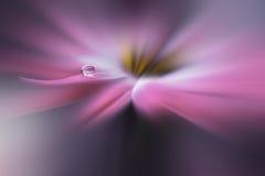 Kropla na kwiecistym tła zbliżeniu Spokojna abstrakcjonistyczna zbliżenie sztuki fotografia Druk dla tapety Kwiecisty fantazja pr zdjęcie royalty free