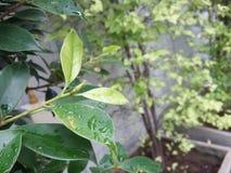Kropla na liściach zdjęcia royalty free