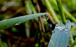 Kropla podeszczowej wody obwieszenie od thegrass Zdjęcia Royalty Free