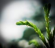 Kropla woda na roślinie Obraz Stock