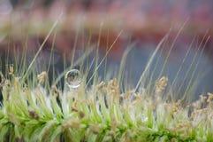 Kropla woda na trawa kwiacie Obraz Stock
