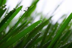 Kropla woda na trawie obraz royalty free