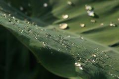Kropla woda na węgla liściu na deszczowym dniu, ruch plamie i depresji, Zdjęcia Stock