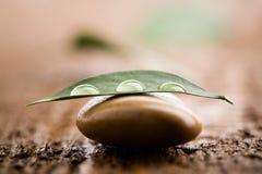 kropla wody liści zdjęcie stock