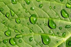 kropla wody liści Zdjęcia Stock