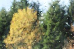 Krople deszcz na szkle przeciw tłu jesień zamazywali drzewa Artestie fotografii tło dla projekta i tekstura Zły a fotografia royalty free