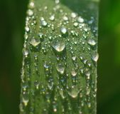 Krople deszcz na trawie obrazy stock