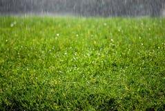 krople deszczu trawa Zdjęcie Royalty Free