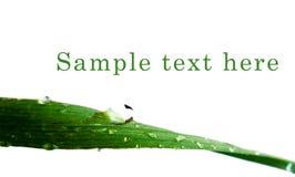 krople deszczu trawa zieleni Obrazy Royalty Free