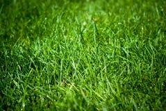 krople deszczu trawa zieleni Obrazy Stock
