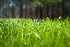 krople deszczu trawa zieleni Obraz Royalty Free