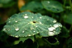 Krople i liścia zakończenie fotografia stock