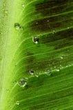 krople leaf woda Zdjęcie Royalty Free