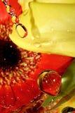 krople miłości Obraz Royalty Free