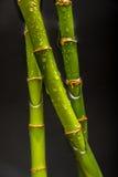 Krople na bambusie Obrazy Stock