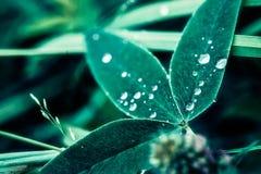 Krople na liściach zdjęcia stock