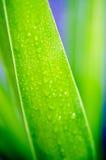 Krople na palmowym liściu jako tło Zdjęcie Stock