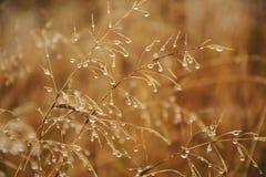 Krople na suchej trawie obrazy stock