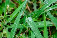 Krople na trawie zdjęcie stock