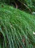 Krople na trawie Obrazy Royalty Free