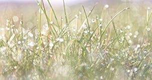 Krople na zielonej trawie zbiory wideo