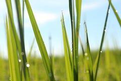 Krople na zielonej trawie w ranku Zdjęcia Royalty Free