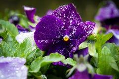 Krople przy kwiatem Zdjęcie Stock