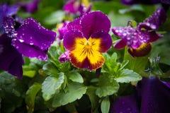 Krople przy kwiatem Zdjęcia Stock