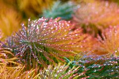 Krople rosa na koloru żółtego, zieleni i czerwieni trawie, fotografia stock