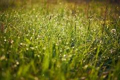 Krople rosa na trawie Zdjęcia Royalty Free