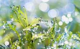 Krople rosa na trawie słońca świecenie od rosy zdjęcia royalty free