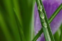 Rosa na trawie Fotografia Stock