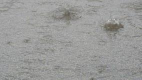 Krople ulewnego deszczu spadek na asfalcie Tropikalny opady deszczu zbiory wideo