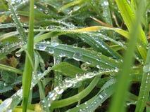 krople w trawie Obrazy Royalty Free