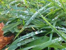 krople w trawie Obraz Stock