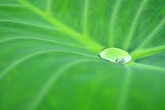 Krople woda na lotosowym liściu Zdjęcie Stock