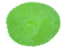 Krople woda na pięknym Lotosowym liściu w stawie Obrazy Royalty Free