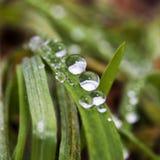 Krople woda na traw ostrzach Zdjęcie Stock