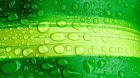 Krople woda na zielonym liściu lub odświeżającej rosie w ranku Fotografia Royalty Free