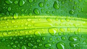 Krople woda na zielonym liściu lub odświeżającej rosie w ranku Obraz Royalty Free