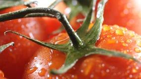 Krople wodny obcieknięcie od above dojrzałych pomidorów Ekstremum zamknięty up HD zbiory