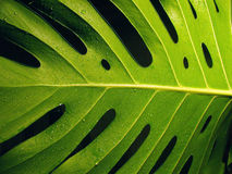 krople wody roślin obrazy stock