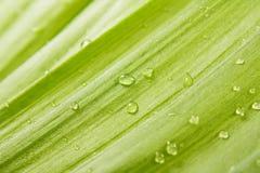 krople zielenieją liść Zdjęcia Stock