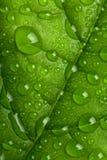 krople zielenieją liść wodę Fotografia Stock